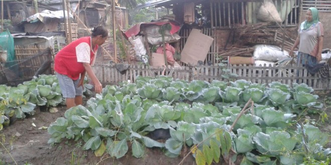 Pekarangan rumah jadi sumber pangan