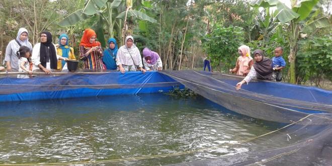 Budidaya Lele Kolam terpal
